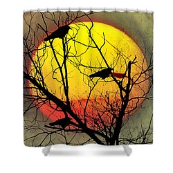 Three Blackbirds Shower Curtain by Bill Cannon