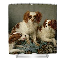 Three Cavalier King Charles Spaniels On A Rug Shower Curtain by English School