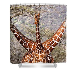 Three Headed Giraffe Shower Curtain