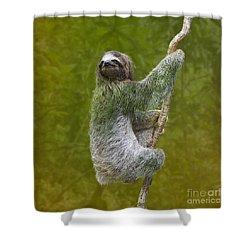 Three-toed Sloth Climbing Shower Curtain by Heiko Koehrer-Wagner