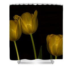 Shower Curtain featuring the photograph Three Tulips by Ed Gleichman
