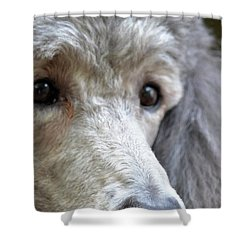 Through Dusty's Eyes Shower Curtain by Maria Urso
