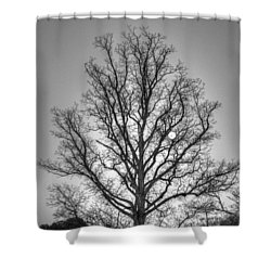 Through The Boughs Bw Shower Curtain by Dan Stone
