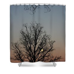 Through The Boughs Portrait Shower Curtain by Dan Stone