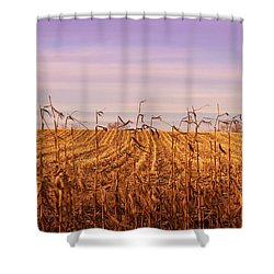 Shower Curtain featuring the photograph Through The Cornfield by Rachel Cohen