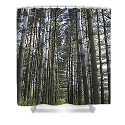 Shower Curtain featuring the photograph Through The Woods by Jeannette Hunt
