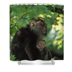 Tibetan Macaque Nursing Baby Shower Curtain by Cyril Ruoso