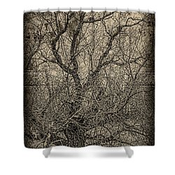 Tickle Of Branches  Shower Curtain by Jerry Cordeiro