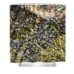 Tidal Pool With Rockweed Shower Curtain by Ted Kinsman