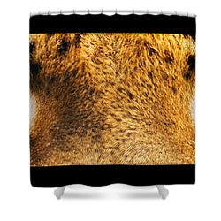 Tiger Eyes Shower Curtain by Sumit Mehndiratta