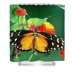 Tiger Longwing Heliconius Hecale Shower Curtain by Michael & Patricia Fogden