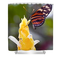 Tiger Longwing Shower Curtain