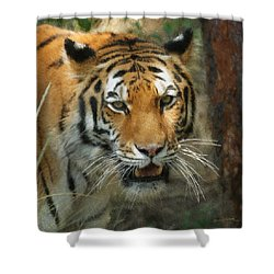 Tiger Painterly Square Format  Shower Curtain by Ernie Echols