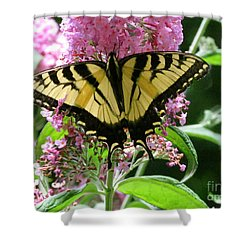 Tiger Swallowtail Butterfly Shower Curtain by Randi Shenkman