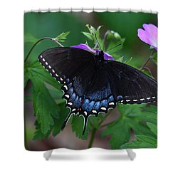 Tiger Swallowtail Female Dark Form On Wild Geranium Shower Curtain