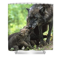 Timber Wolf Canis Lupus Mother Shower Curtain by Konrad Wothe