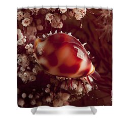 Tiny Cowrie Shell On Dendronephtya Soft Shower Curtain by Mathieu Meur
