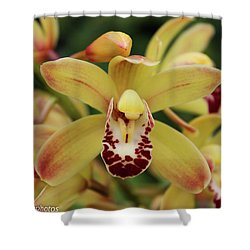 Shower Curtain featuring the photograph Tiny Dancer by Rachel Cohen