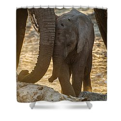 Tiny Trunk Shower Curtain