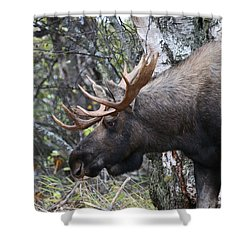 Shower Curtain featuring the photograph Tired Eyes by Doug Lloyd