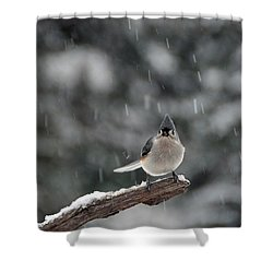 Shower Curtain featuring the photograph Titmouse Endures Snowstorm by Mike Martin