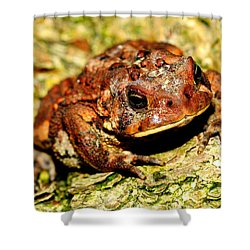 Shower Curtain featuring the photograph Toad by Joe  Ng