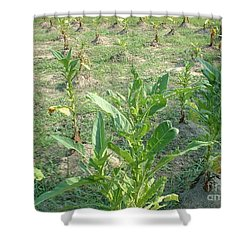 Tobacco Addiction Shower Curtain by Mark Robbins