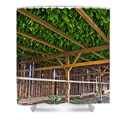 Tobacco Shower Curtain