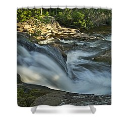 Top Of The Dog 4191 Shower Curtain by Michael Peychich