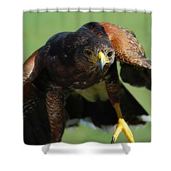 Top Raptor Shower Curtain by Skip Willits