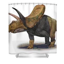 Torosaurus Latus, A Prehistoric Era Shower Curtain by Sergey Krasovskiy