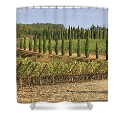 Toscana Shower Curtain by Joana Kruse