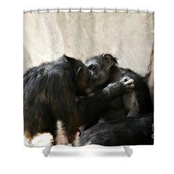 Touching Moment Gorillas Kissing Shower Curtain by Peggy Franz