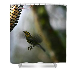 Shower Curtain featuring the photograph Townsend Warbler In Flight by Kym Backland