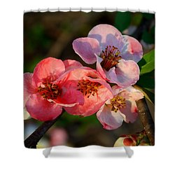 Shower Curtain featuring the photograph Toyo Nishiki Quince by Kathryn Meyer