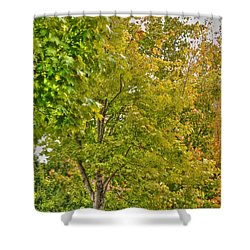 Shower Curtain featuring the photograph Transition Of Autumn Color by Michael Frank Jr