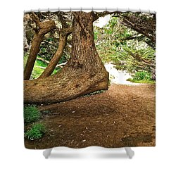 Tree And Trail Shower Curtain by Bill Owen