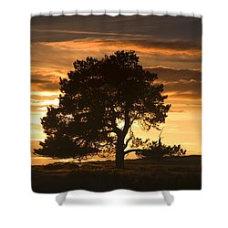 Tree At Sunset, North Yorkshire, England Shower Curtain by John Short
