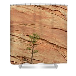 Tree Clinging To Sandstone Formation Shower Curtain by Gerry Ellis