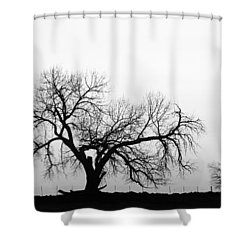 Tree Harmony Black And White Shower Curtain by James BO  Insogna