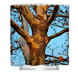Shower Curtain featuring the photograph Tree In Camo by Rachel Cohen