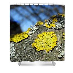 Shower Curtain featuring the photograph Tree Lichen by Ausra Huntington nee Paulauskaite