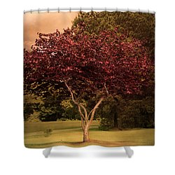 Tree Of Love Shower Curtain by Jai Johnson