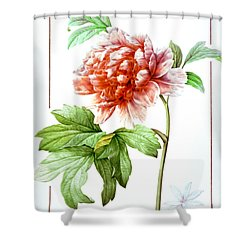 Tree Peony Shower Curtain by Granger