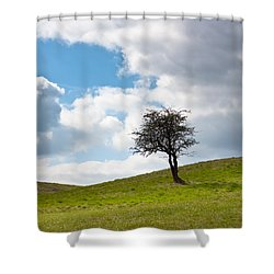 Tree Shower Curtain by Semmick Photo
