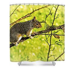 Tree Visitor Shower Curtain by Karol Livote