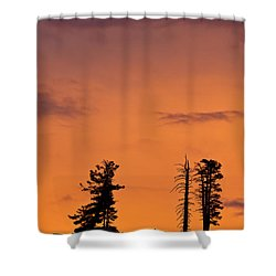 Trees At Sunset Shower Curtain