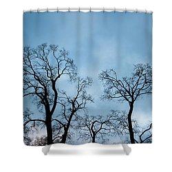 Trees. Autumn. Shower Curtain by Konstantin Dikovsky