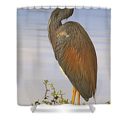 Tricolor Heron Shower Curtain by Dave Mills