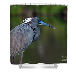 Shower Curtain featuring the photograph Tricolored Heron by Art Whitton